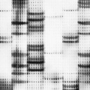 dna-testing-0511-mdn